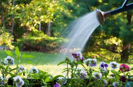 watering new landscape plants