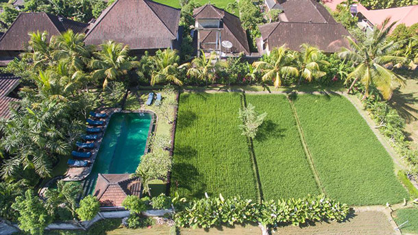 Bliss Bungalow Ubud