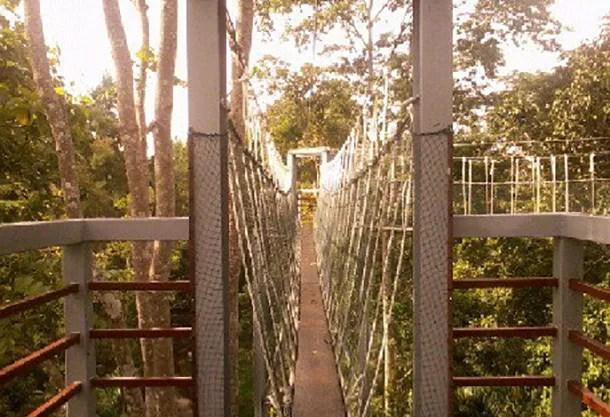 Canopy Walk Perlis