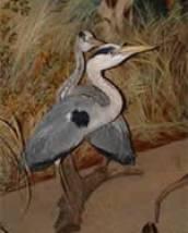 Salle sur la faune des étangs de Sologne