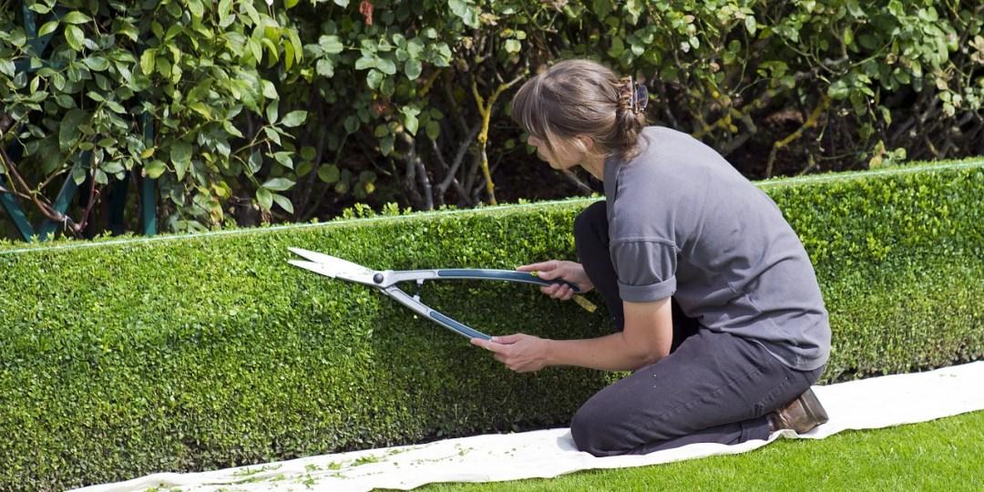 Un paysagiste en action