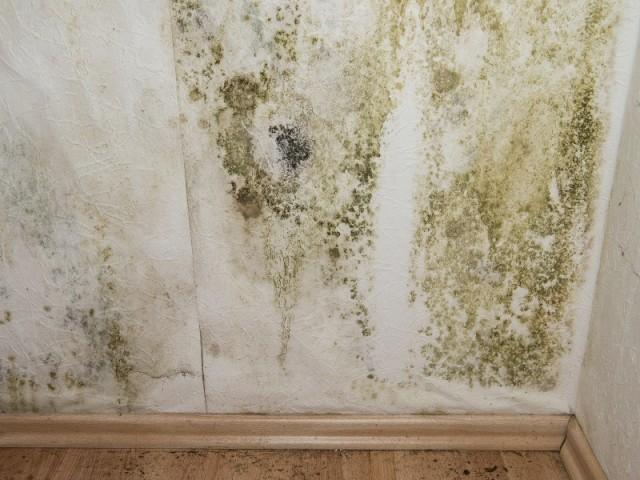 Maison Humide Que Faire 10 Trucs Contre La Condensation Sur Les Fen Tres