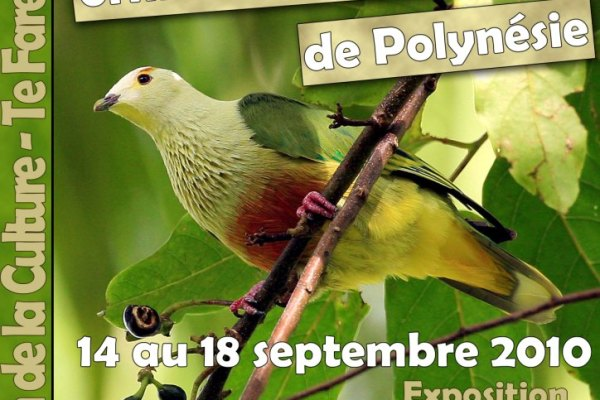 affiche festival ornithologique light