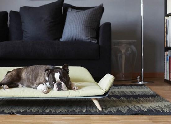Cucce-per-cani-di-design