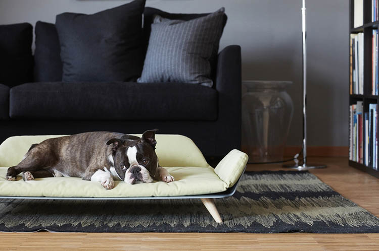 cucce per cani di design abbiniamole al nostro stile