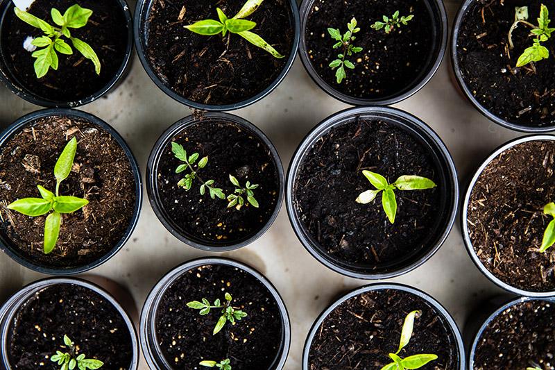 piante da interno da collocare a nord