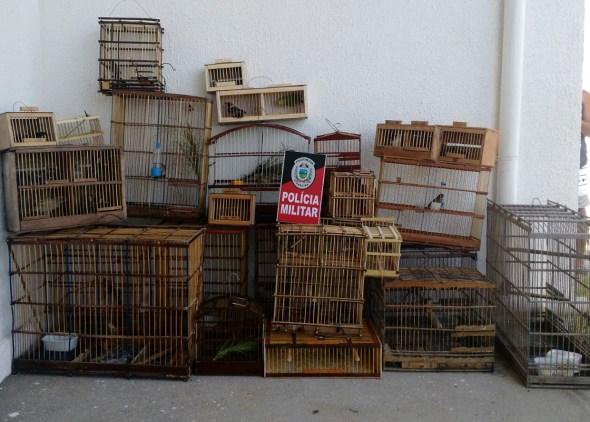 Resultado de imagem para fotos fotos Polícia apreende 18 aves silvestres em cativeiro ilegal na Paraíba