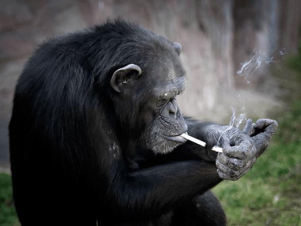 macaco-fumante1