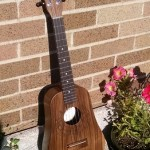 BLACK WALNUT TENOR
