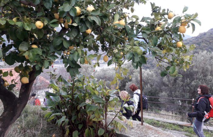 limone_paesaggio