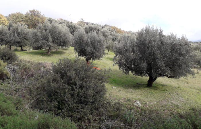 paesaggio_Gallicianò