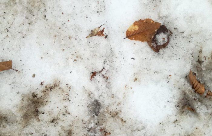 10.aprile.2019_neve