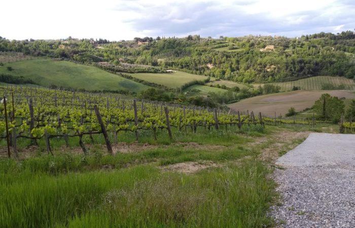 Visita all'azienda Manvi Wines_Montepulciano