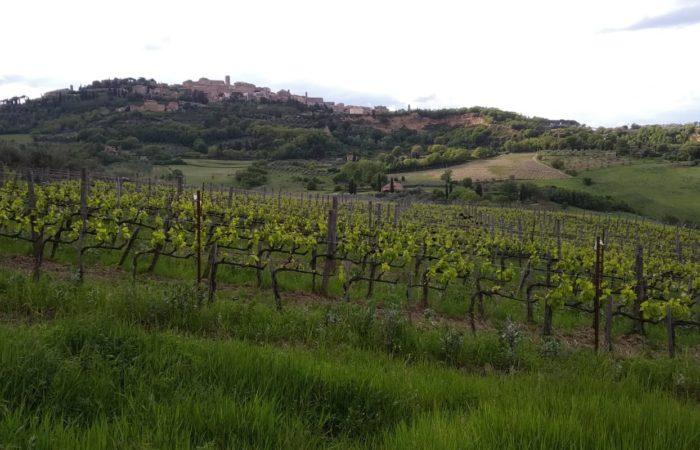vigneti-azienda Manvi Wines di Montepulciano