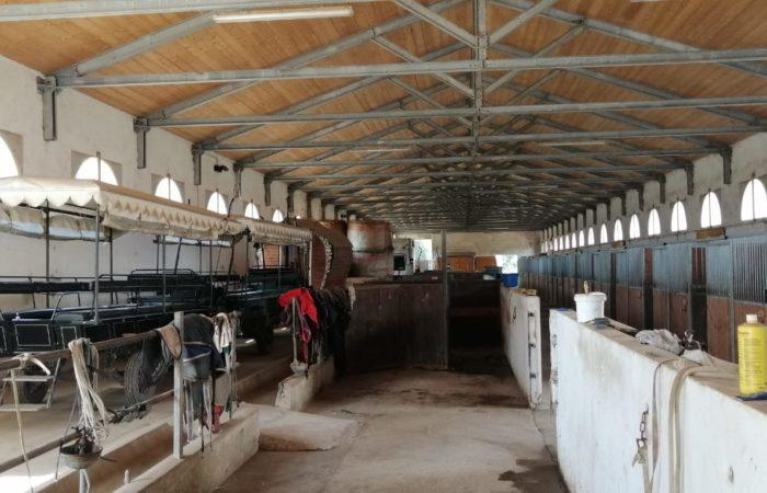 Parco regionale Massaciuccoli e Ippodromo San Rossore_2