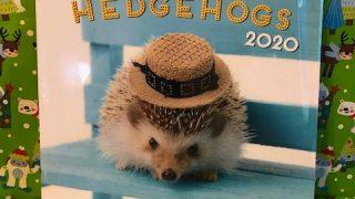 Adorable Hedgehogs 2020