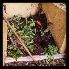 #Compost pile
