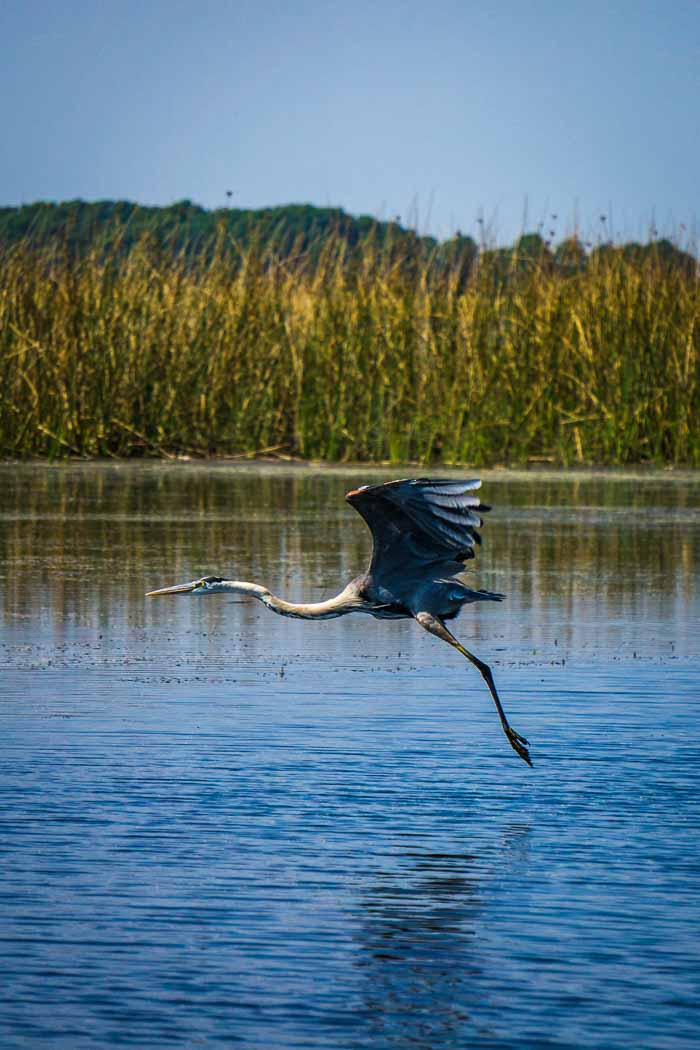 Bird Watching Tour Florida Everglades