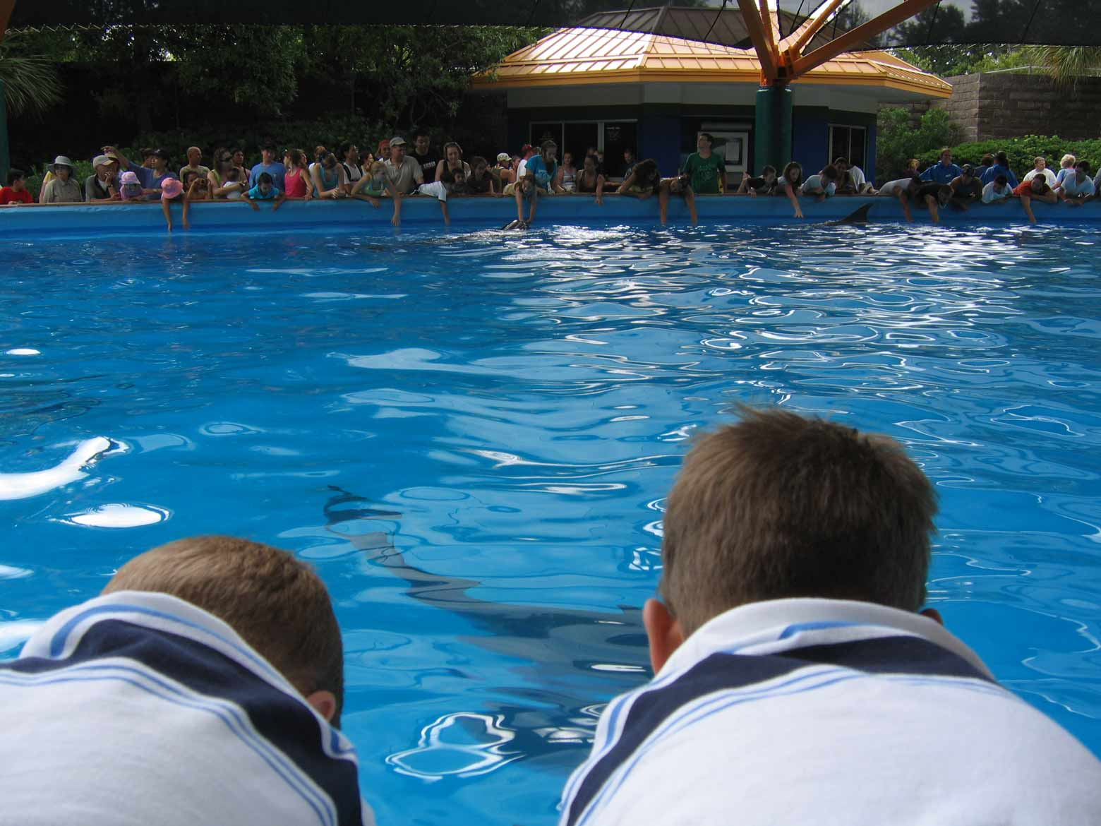 Sea World San Antonio then and now! Come see all the changes the park has made, as well as a walk down memory lane!