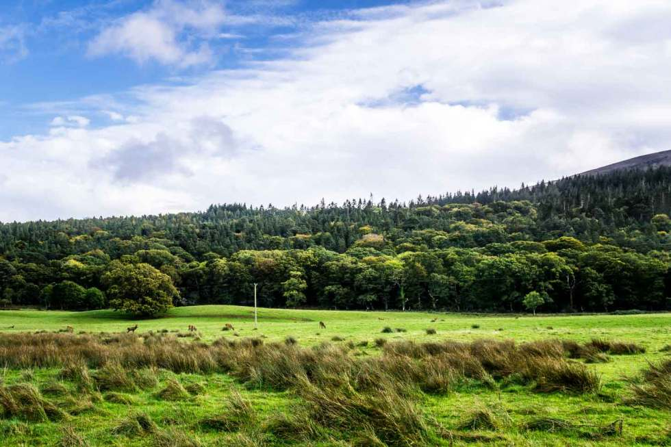f54db72b6539c Hiking in Ireland : Killarney National Park Walk - Major Hoff Takes ...