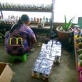 Souvenir Kaktus Sukulen Pot Warna Warni Kemasan Mika