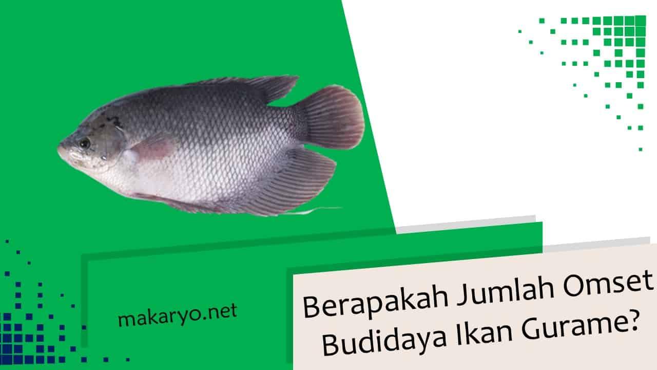 Berapakah Jumlah Omset Budidaya Ikan Gurame