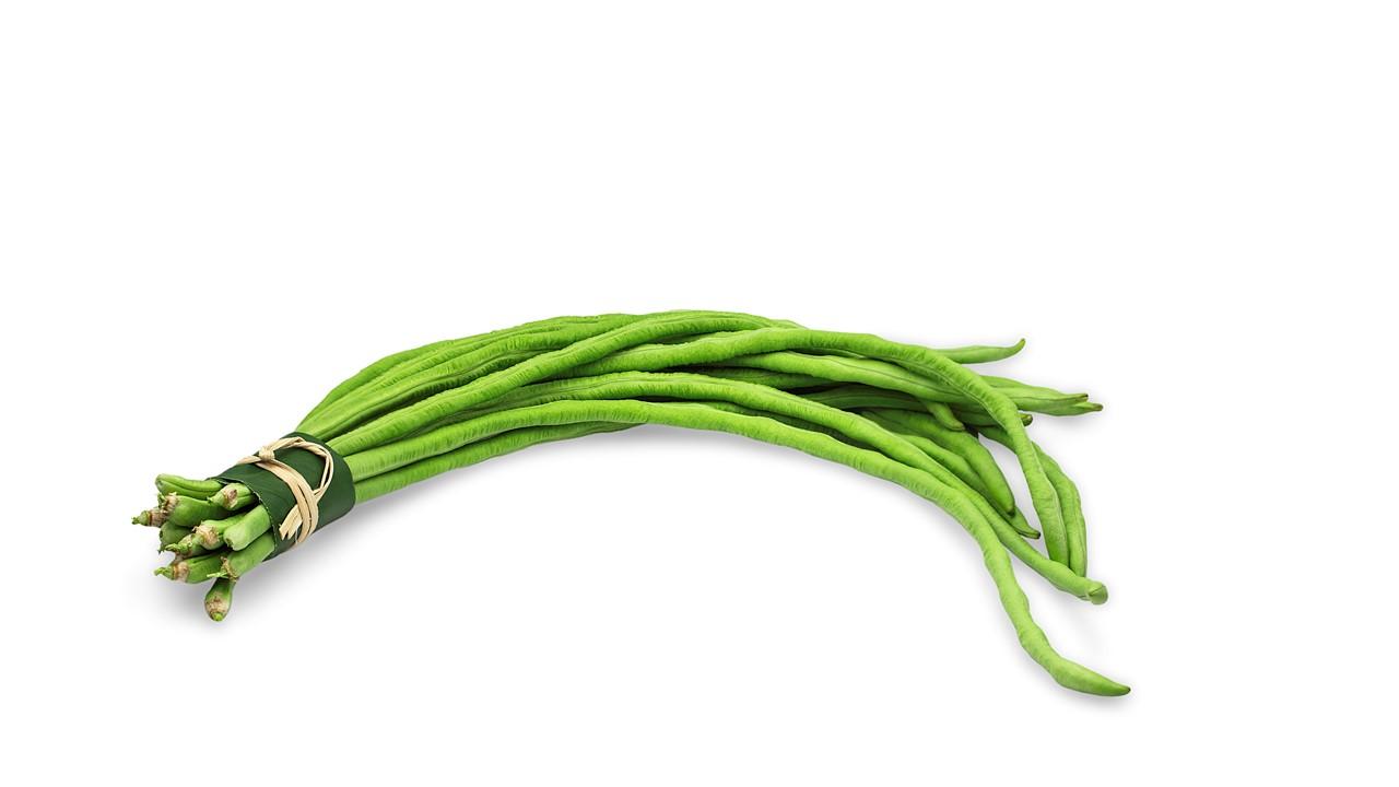 Cara budidaya kacang panjang yang mudah