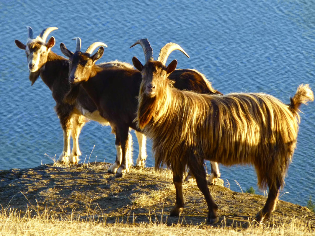 Three Billy Goats Gruff By S E Schlosser