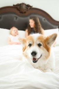 Make it Posh family and dog