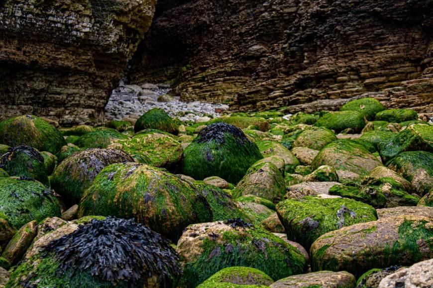 Rocks just off of North Landings