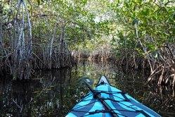 Kayaking through a mangrove tunnel.