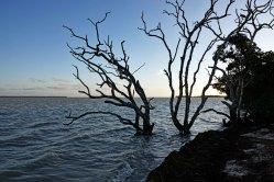 View of Florida Bay.