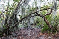 Spanish Moss on the Bayshore Loop Trail.