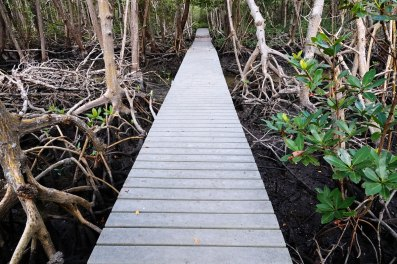 Boardwalk across the marsh.