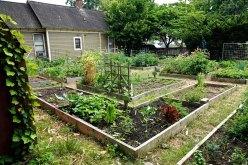 Cabbagetown Community Garden.