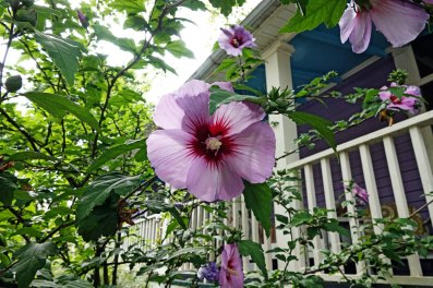 Bloom in my friend Karen's driveway. Notice the blue porch ceiling. That's a southern thing. House painted by Greg.