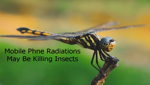 German Study Shows That Mobile Phone Radiations May Be Killing Insects