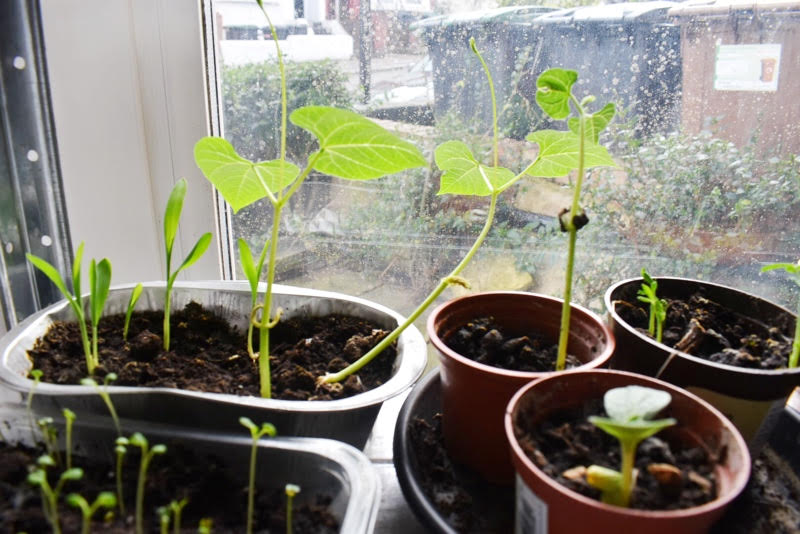 seedlings planted indoors