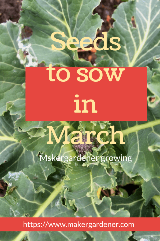 seeds to sow in March