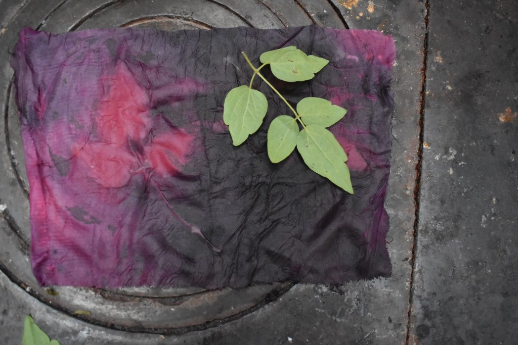 Eco printing on fabric using cochineal
