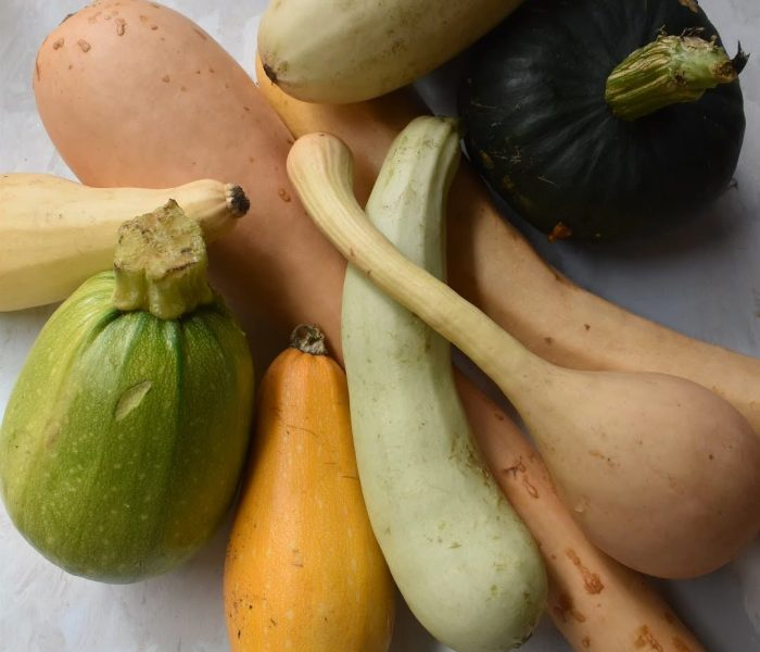 Growing and harvesting winter squash