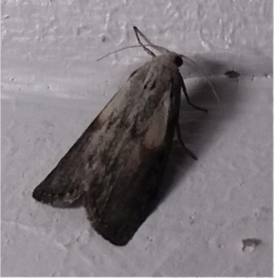 Moths…