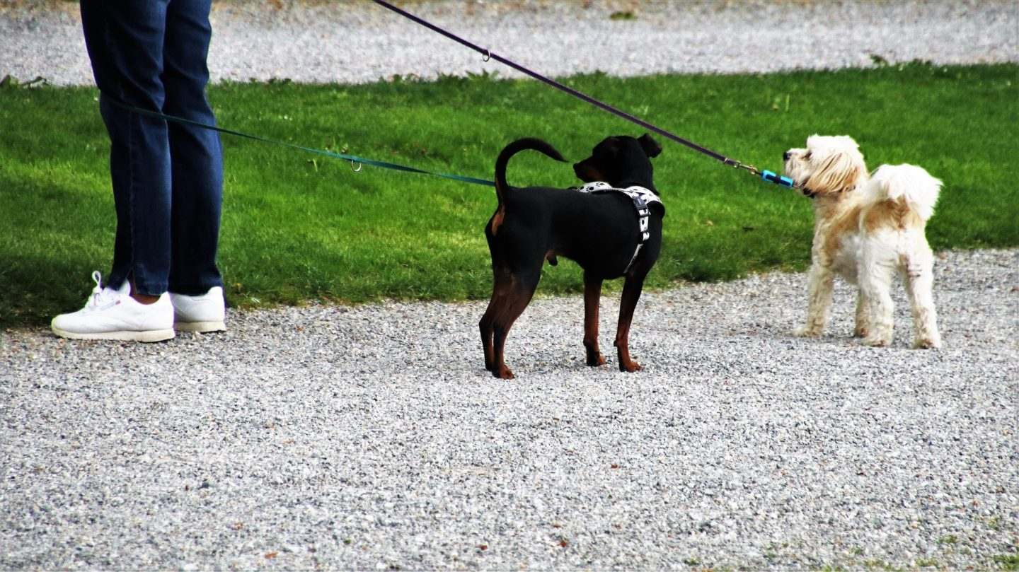 How to make money from running a dog walking business or side hustle