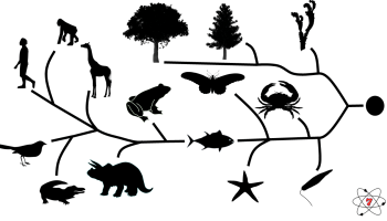 A simplified diagram for GCSE science showing the tree of life. Showing how life has evolved.
