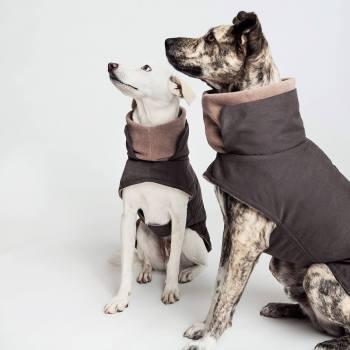 Graphite waterproof dog jacket