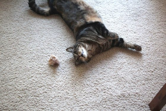 tabs-cat-toy-squirrel-2