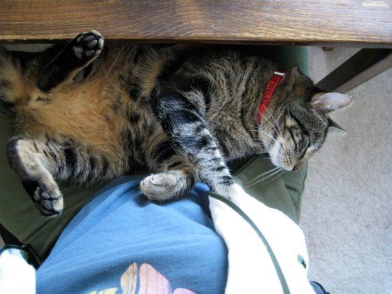 tabs-cat-kitty-model-2009-1