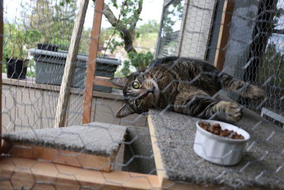 tabs-cat-outside-cat-enclosure-5