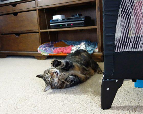 The Go Cat Cat Catcher