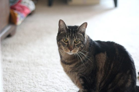 tabs-cat-thanksgiving-7